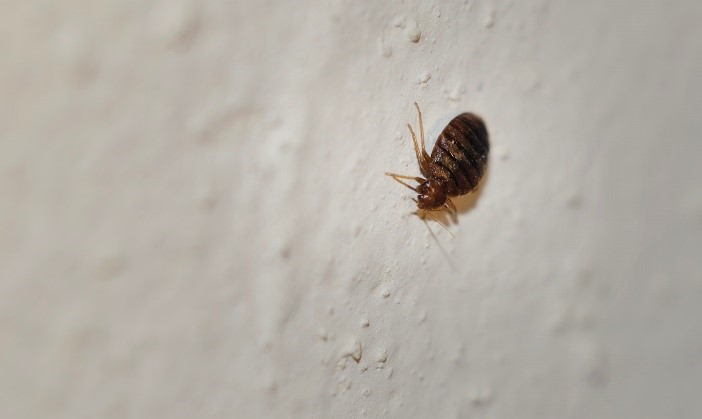 Eliminate bed bugs with cold