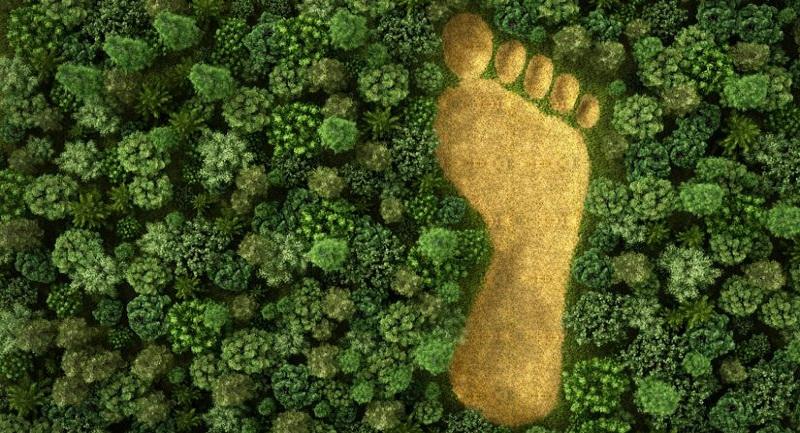 best ecological footprint test